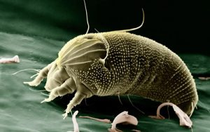 dust-mite-ireland-dublin